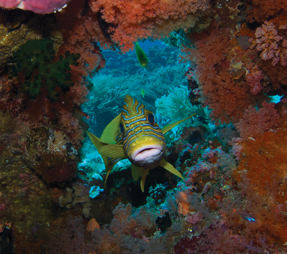 Diving Raja Ampat - Photo by Paul Johnson