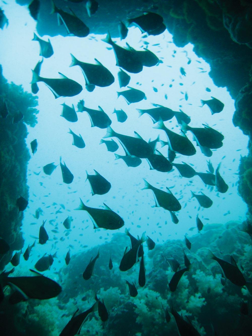 The Chimney Dive at Koh Ha Yai